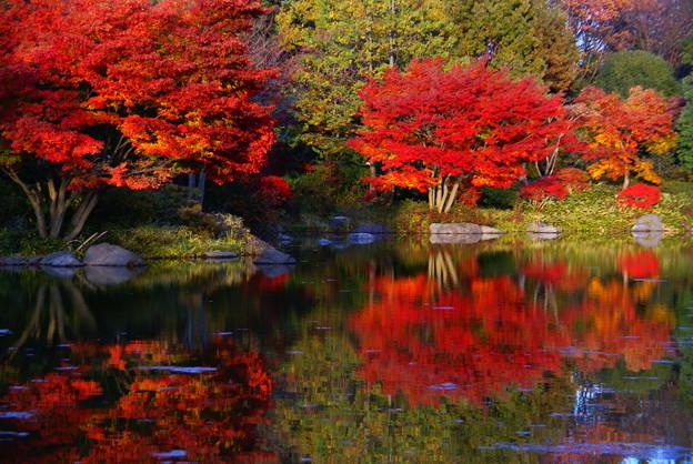 國營昭和記念公園。圖片取自:http://ppt.cc/NtGQx