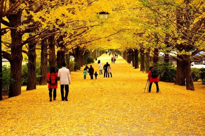 國營昭和記念公園。圖片取自:http://ppt.cc/dnvWG