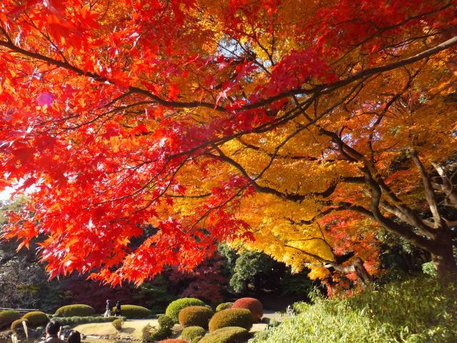 新宿御苑楓紅,圖片取自:http://ppt.cc/suU3N