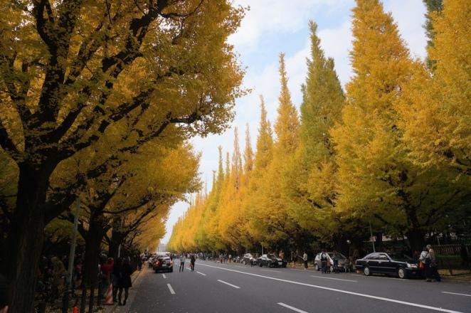 新宿外苑,銀杏大道。圖片取自:http://pic.pimg.tw/sultt/1418982177-3659633832.jpg