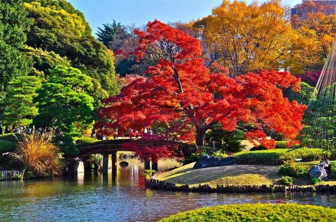 小石川後樂園,圖片取自:http://iguang.tw/u/4219584/article/429005.html
