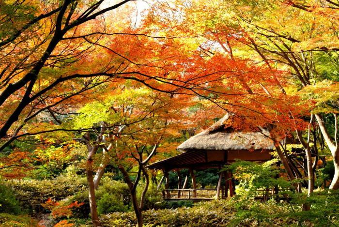 六義園楓紅。圖片取自:http://ppt.cc/Am1BK