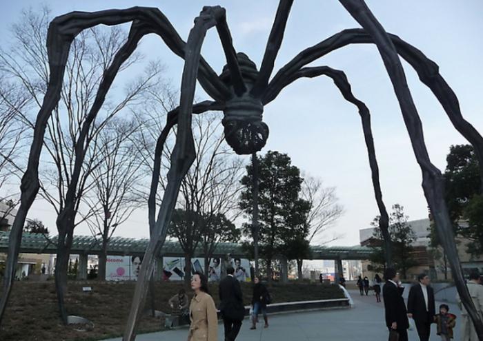六本木蜘蛛。圖片取自:http://ppt.cc/T8cXN