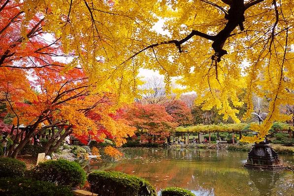 日比谷公園楓紅,圖片取自:http://ppt.cc/u9xo