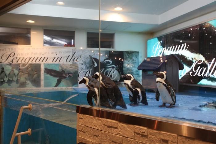 penguin_20150115_g