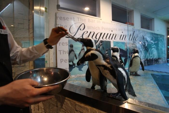 penguin_20160115_l