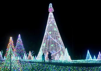 27公尺的「女神樹」
